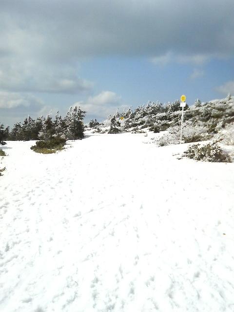 樹氷原スタート