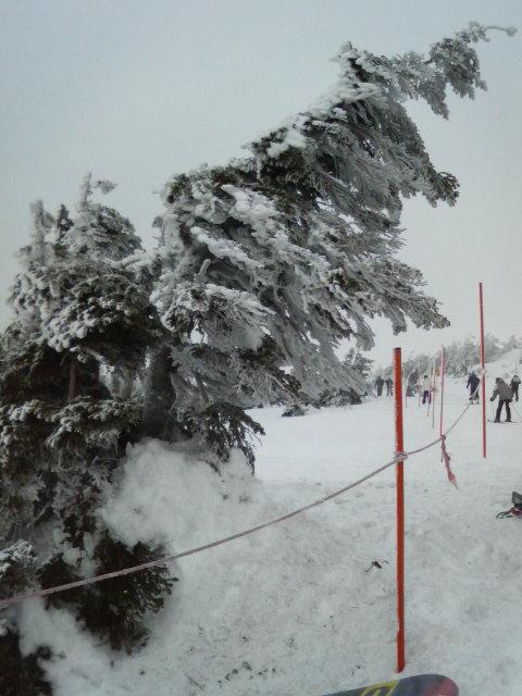 山頂の樹氷